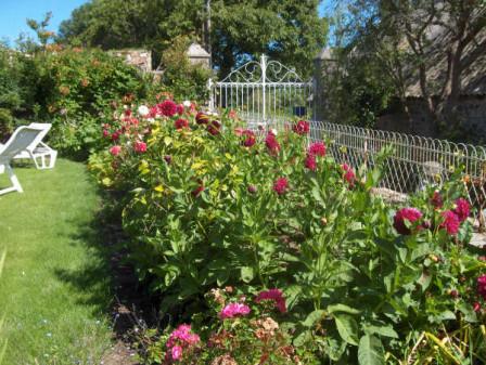 dalhias jardin fleuri Mescran